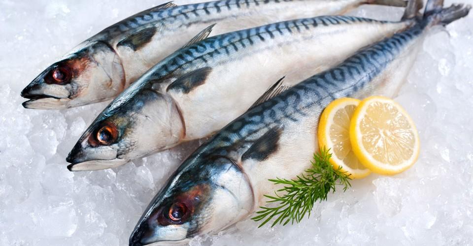 bestemaatje-makreel